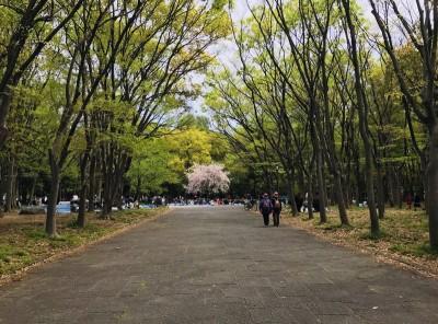 青年部_お花見2018_02
